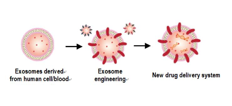 exosome as nanoscale vesicles Exosomes are cell-derived vesicles that are present in many and perhaps all eukaryotic fluids, including blood, urine, and cultured medium of cell cultures a sub-type of exosomes, defined as matrix-bound nanovesicles (mbvs), was reported to be present in extracellular matrix (ecm) bioscaffolds (non-fluid) the.